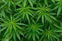 В Грузії декриміналізували вживання марихуани
