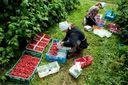 Украинские заробитчане в Польше: консул озвучил главные проблемы работников