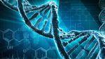 Ученые обнаружили ген, который определяет сексуальную ориентацию