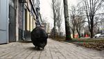 Оккупированный Донецк взбудоражила черная свинья, прогуливающаяся в центре