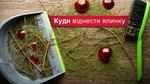 Куди віднести ялинку після свят у Києві та Львові: карта