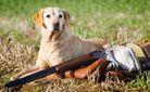 В России собака на охоте застрелила охотника