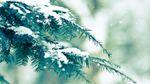 Синоптики прогнозують сильні снігопади:  заметілі накриють південні та центральні регіони