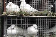 У Житомирі на підтримку військових провели виставку птахів