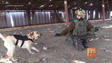 В бронежилеті і з шевронами на спині чотирилапий боєць захищає Україну