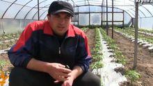 Работать в Крыму невозможно, — крымский аграрий