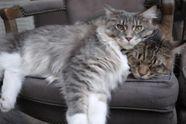Вчений пояснив 6 звичок вашого кота, які дивують