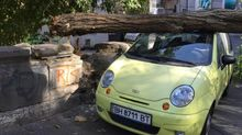 На дві машини в центрі Одеси впало величезне дерево