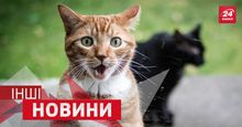 """ІНШІ новини: що змушує котів """"злітати"""" у повітря, чому голкіперам не можна залишати поле"""
