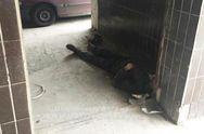 Полиция Киева назвала причину смерти бездомного, найденного под стенами больницы