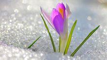 У Гідрометцентрі розповіли, коли завершаться снігопади та мороз