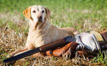 У Росії собака на полюванні застрелив мисливця