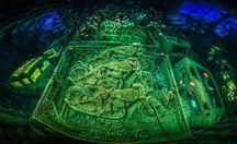 Найкращі підводні фотографії року за версією престижного конкурсу: фоторепортаж з глибини