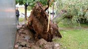 Сильні урагани сколихнули частину Польщі: дерева виривало з корінням