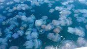 Аннексированный Крым страдает от нашествия медуз: появились фото