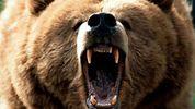 Ведмідь загриз 6-літнього хлопчика у Росії: деталі жахливої трагедії