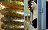 Массовое отравление рыбой во Львове: продавщице грозит немалый срок заключения