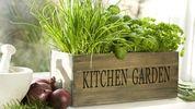 5 корисних продуктів, які ви можете виростити на власному підвіконні