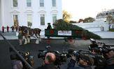 В резиденцию Трампа уже доставили рождественскую елку: опубликованы фото и видео
