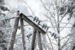 29 населенных пунктов остаются без электроснабжения из-за непогоды