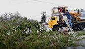 Українська ялинка стала посміховиськом у центрі Кишинева: скандал набрав обертів