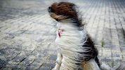 До 28 м/с: синоптики предупредили, где будет сильный штормовой ветер