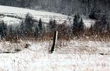 На Буковині знайшли у снігу мертвого екс-депутата