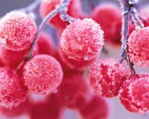 Готовьтесь к глобальному похолоданию: на выходные будет кусачий мороз