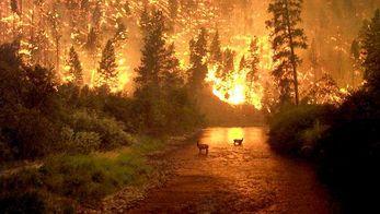 Европу охватили масштабные пожары