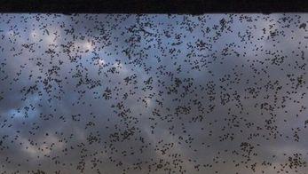 Кара насекомыми: российский город страдает от нашествия клопов