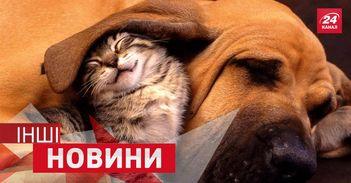 ДРУГИЕ новости. Вечные баталии между собаками и котами. Шварценеггер взял пример с Кличко