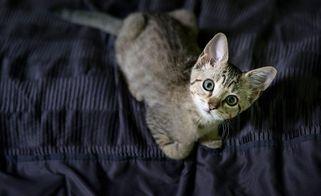 Волонтери в оригінальний спосіб шукають домівки для безпритульних тварин