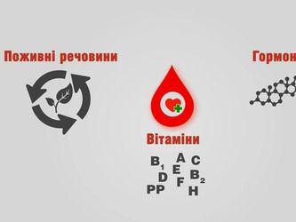 Линия жизни: Столетие назад человечество научилось делать переливание крови
