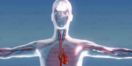 Факты о здоровье. Калий и магний – без чего не может наш организм