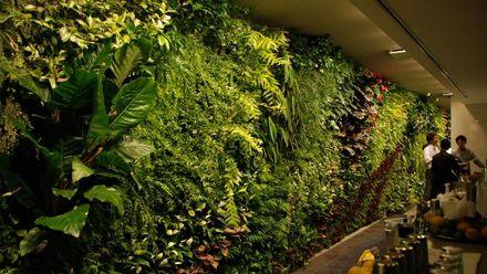 Вертикальные сады: невероятное единение города и природы в работах Бланка
