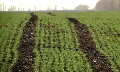 Урожай в Украине под угрозой из-за погоды