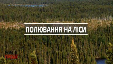 Як українські можновладці нахабно приватизують величезні масиви лісів