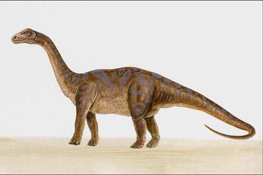В Іспанії знайшли залишки невідомої закам'янілої тварини: фото