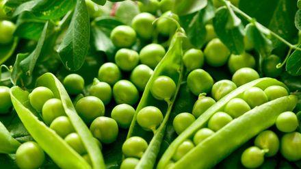Цього року Україна може зібрати рекордно багатий врожай гороху