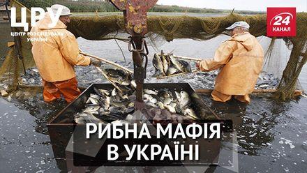 Як чиновники, правоохоронці та екологи прикривають рибну мафію, – розслідування ЦРУ. Частина 1