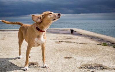 Собаки по запаху смогут диагностировать рак