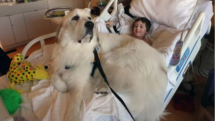 Собак хочуть залучити до лікування пацієнтів у Британії