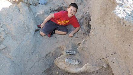 Мальчик нашел остатки древнего животного
