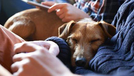 Радиостанцию для собак открыли в Германии