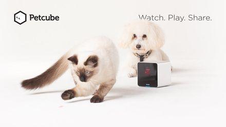 Petcube – стартап, на який давно чекали ваші улюбленці
