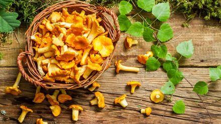Сезон лисичок: що приготувати із запашних грибів