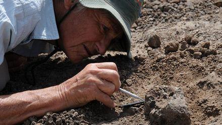 Палеонтологи знайшли скам'янілості тварини, якій 250 мільйонів років