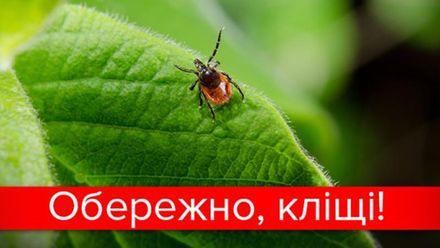 Небезпечні кліщі: на Львівщині 13 дітей заразилися хворобою Лайма після укусу