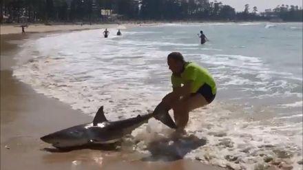 Повторять не стоит: австралиец отчаянно затянул за хвост акулу в океан