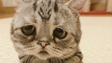 Сеть растрогал очень печальный котенок: фото
